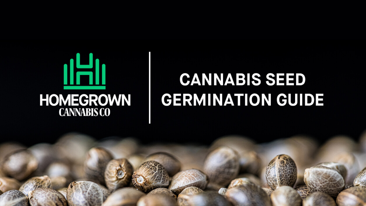 Cannabis Seed To Germinate